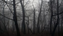 dark-forest-backgrounds
